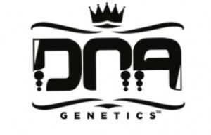 dna-genetics-cannabis-seeds-869443